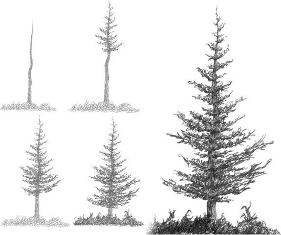 holiday time 7.5 majestic pine instructions